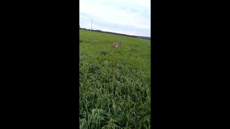 Видео от Приют для собак Островок надежды СПб