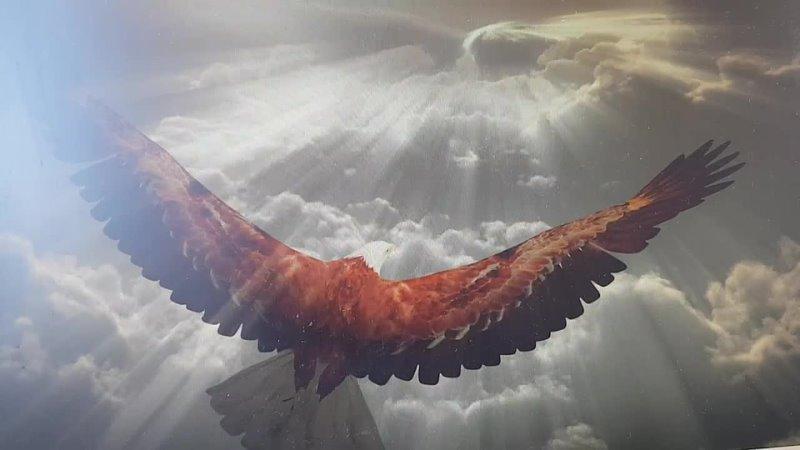 Видео от Ольги Солнечной