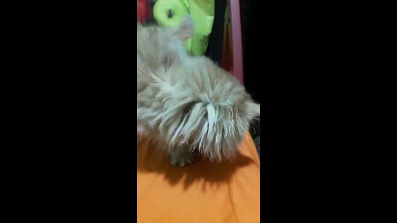 Видео от Анны Давыдовой