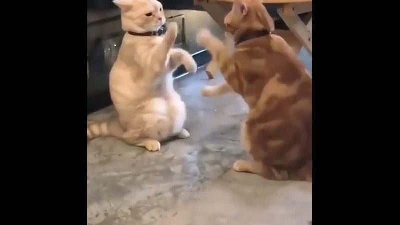 Видео от Смешные кошки записанные на видео и не только