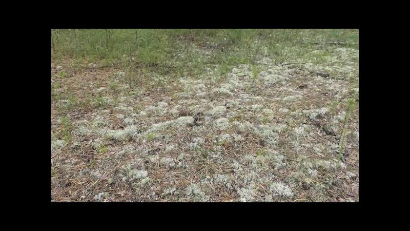 Видео от Виктора Мамзина