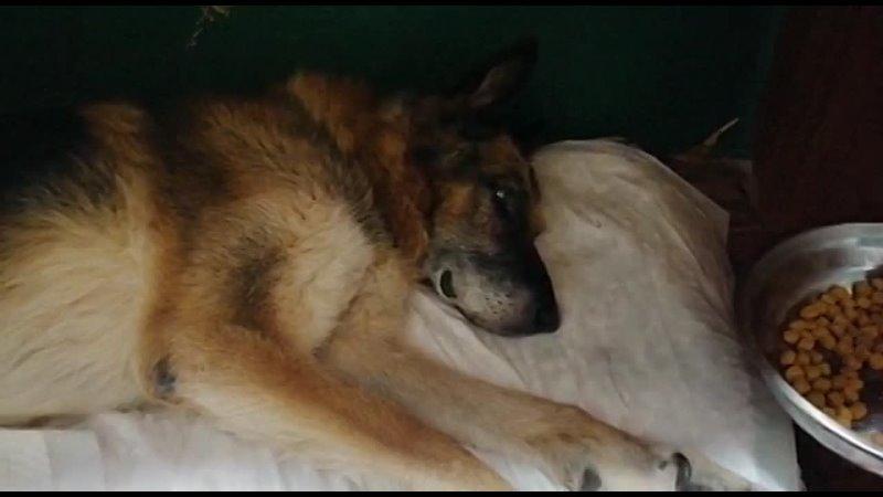 Видео от Кошки и собаки Территории добра