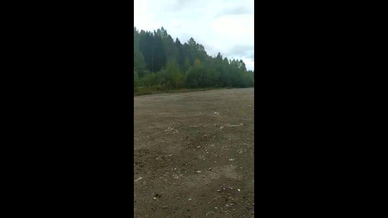 Видео от Приют для травмированных животных Клякса