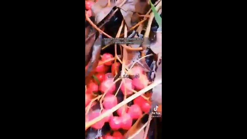 Видео от Анны Величко