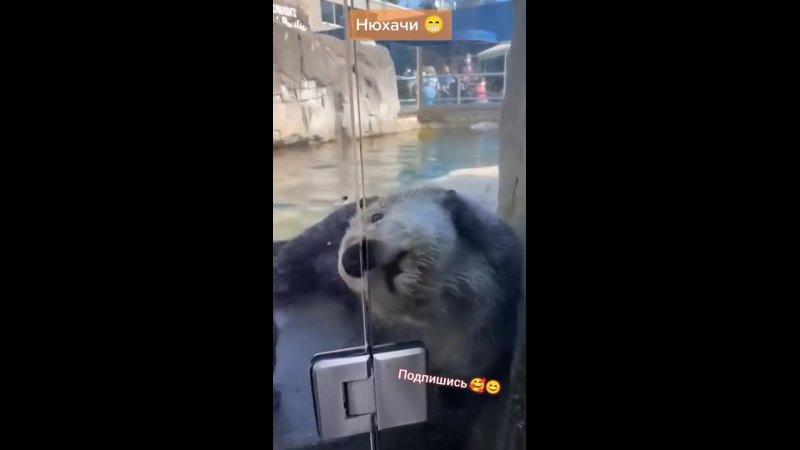 Видео от 114TV