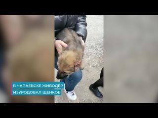 😱«Хотел сделать алабаев»: в Чапаевске живодер ножн...