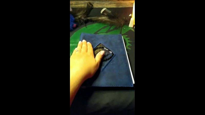 Кошка Гекаты глаз дракона и паук каракурт