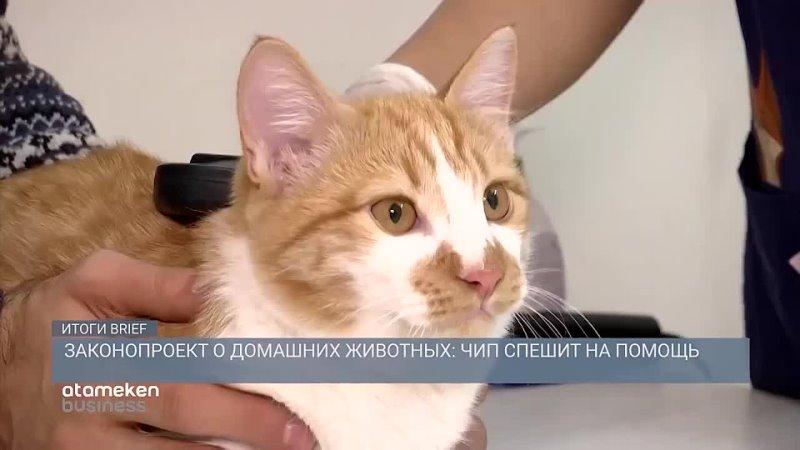 Мой кот Симба на ТВ