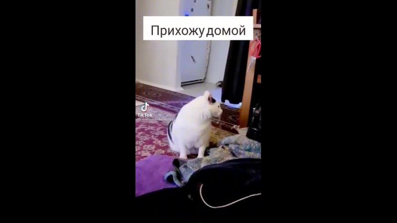 Видео от КОШАЧИЙ МИР помощь кошкам и котятам КОЛПИНО