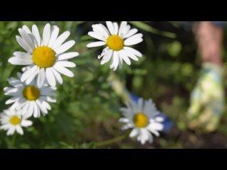 Мой Байкал | Экология kullanıcısından video