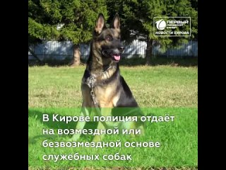 Полиция отдаёт собак.  В Кирове полиция отдаёт на ...