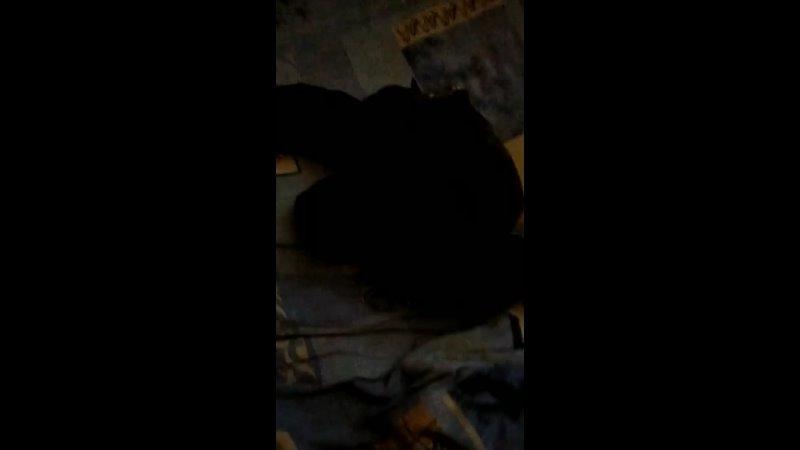 Видео от ЗОО Помощь Бездомные животные Звенигово