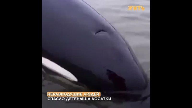 Видео от ЖИТЬ