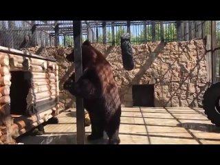 Степан и Маша в челябинском зоопарке