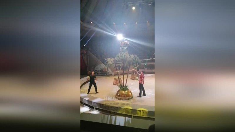 В Нижнем Тагиле разъяренная обезьяна накинулась на ребенка прямо во время представления