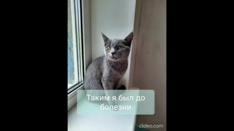 Помощь животным попавшим в беду г Кемерово