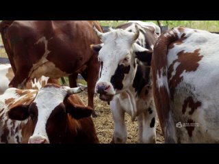 В нашем районе большое количество крестьянско-ферм...