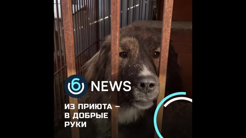 Видео от Группа газеты Знамя труда Дубровского района