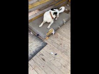Пропала собака! 🆘Фрязино, район Краузе, магазин Ле...