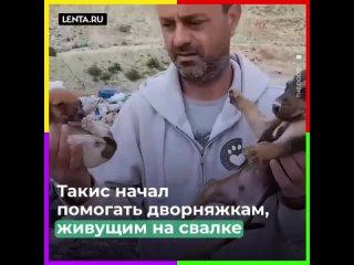 пожертвовал бизнесом ради спасения собак