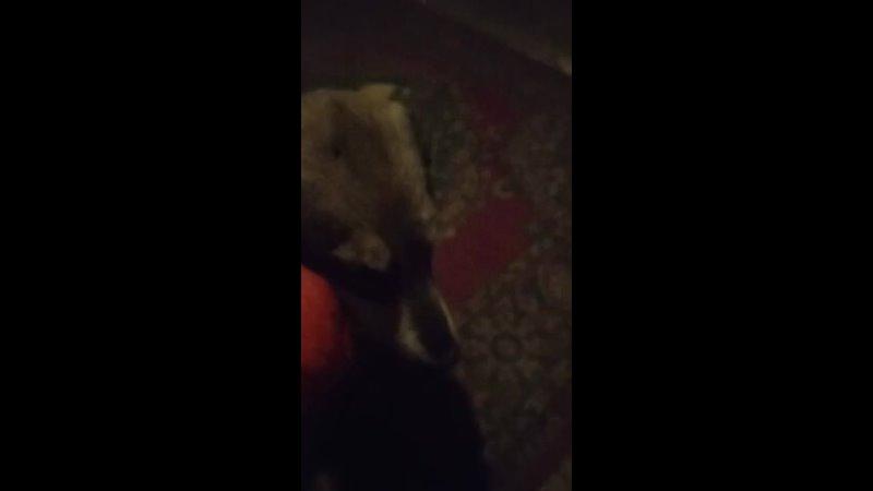 Видео от БФ Спутник дворняги