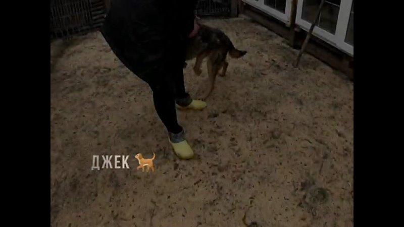 Видео от Елены Грачевой