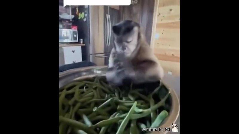 Видео от ИНТЕРДОЛ Зеленодольск