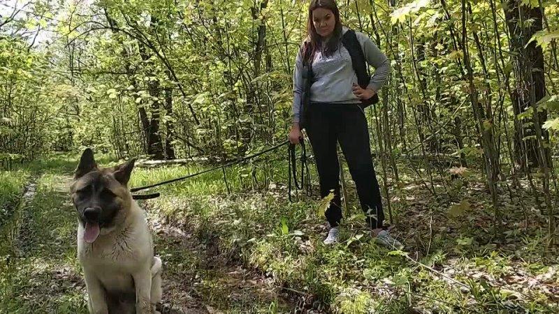 Видео от Zoo Животные Планеты