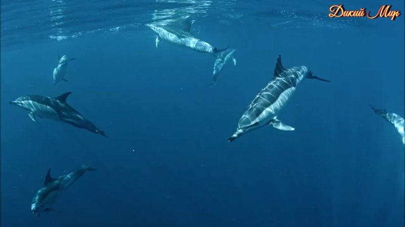Канарские острова Жизнь на пределе 2016