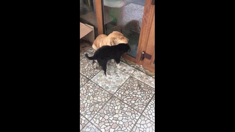 Видео от Верный друг Помощь животным Нальчик