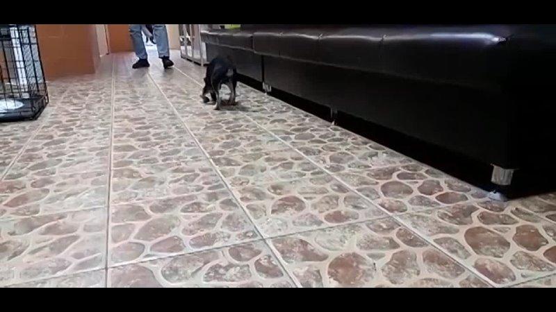 Видео от Лидии Колесниковой