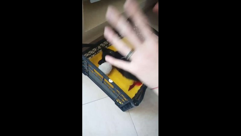 Storage emulated 0 DCIM Video V11007