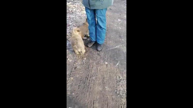 Видео от Юлии Паршиной