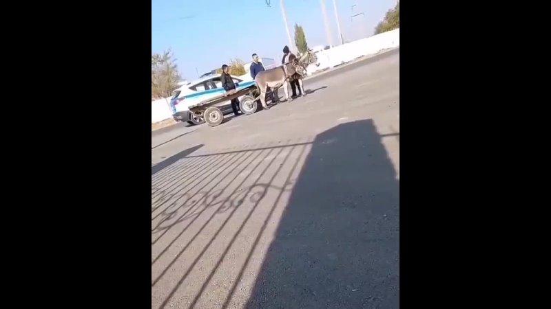 Минутка юмора Уже на ишаке ездить нельзя видео с полицейскими рассмешило Казнет В соцсетях распространяют видео в кото