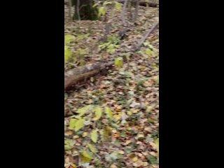 За голубятней напротив автостанции в лесу бегает с...