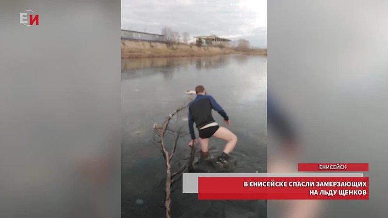 В Енисейске мужчина спас двух новорожденных щенков из ледяной воды