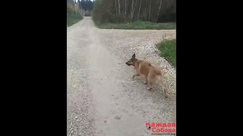 Видео от Приют на ул Зорге
