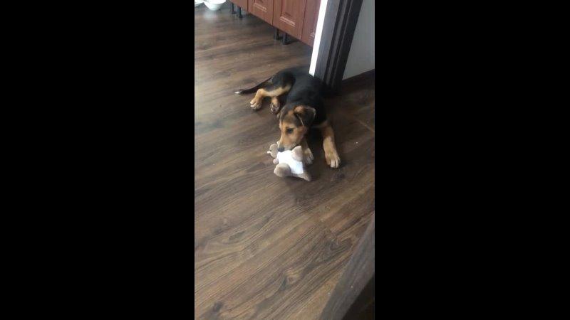 Видео от Собака бабака
