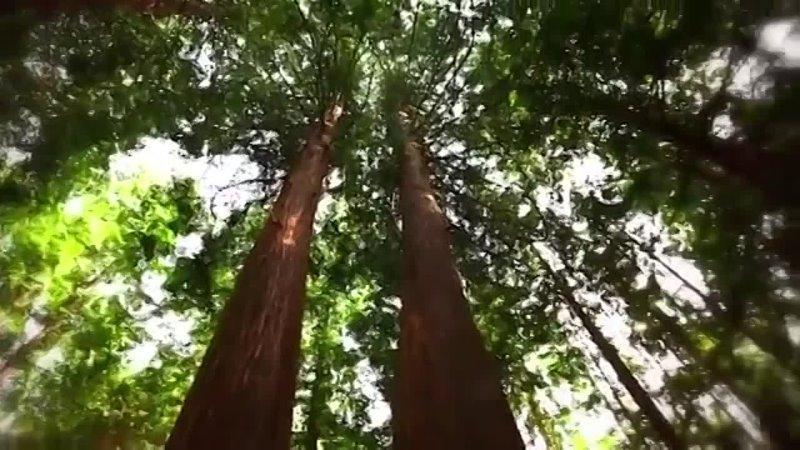 Видео от Библиотека п Коврово