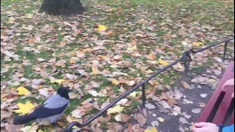 Видео от Ильи Павлова