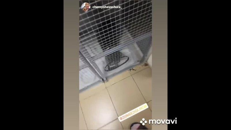 MovaviClips Video 20211019
