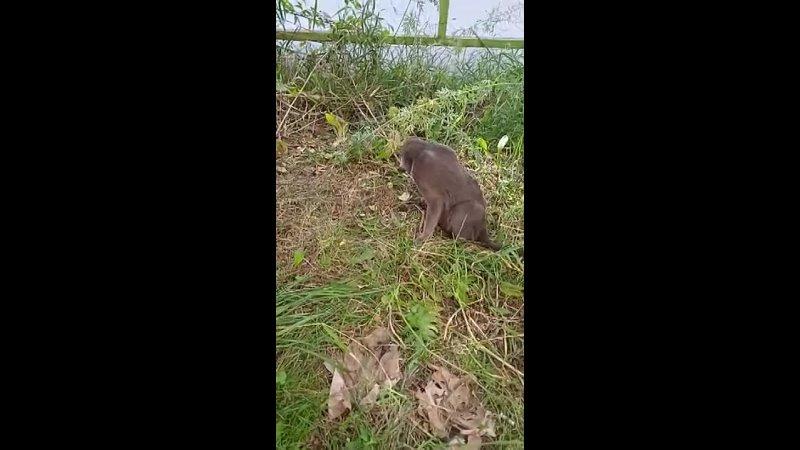 Видео от Приют для кошек OzziHome