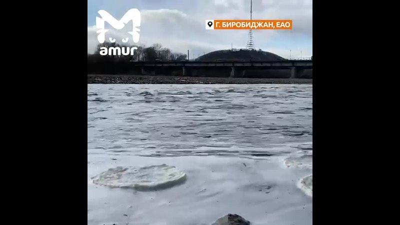 Ледяные медузы атаковали реку Биру в Биробиджане
