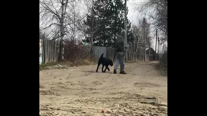Видео от Ольги Чуриной