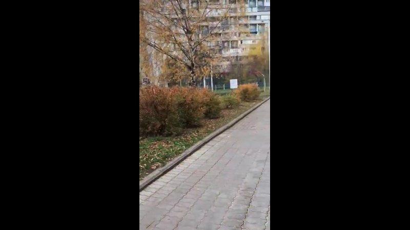 Видео от Николь Васильевой