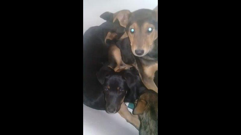 Видео от Помощь животным Мордовии