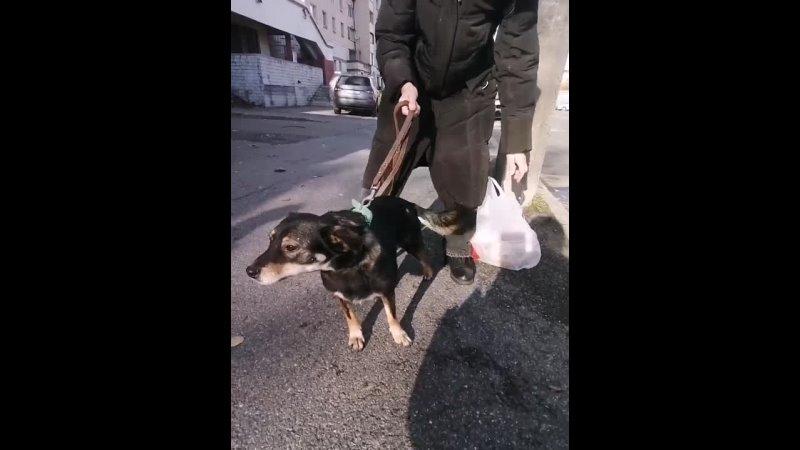 Видео от Моя Хвостатая Любовь помощь животным
