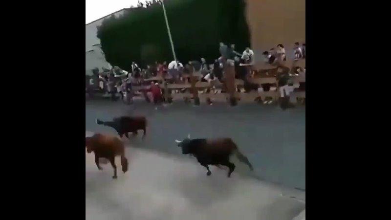 Традиционный забег быков в Испании чуть не закончился трагедией
