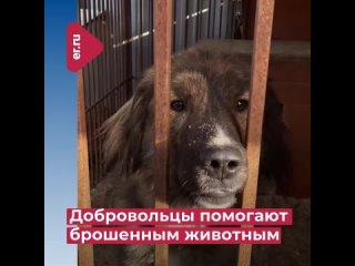 ЕДИНАЯ РОССИЯ Кировский район Самара kullanıcısından video