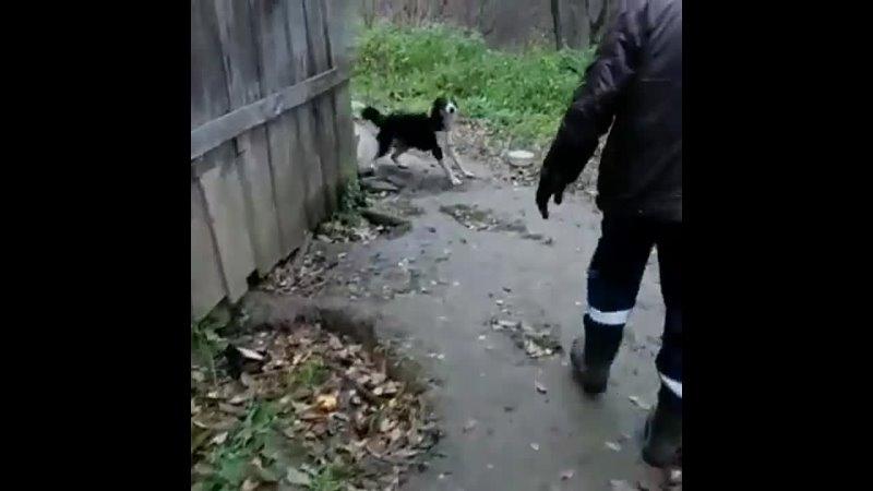 Видео от Сообщество волонтеров Ногинского приюта